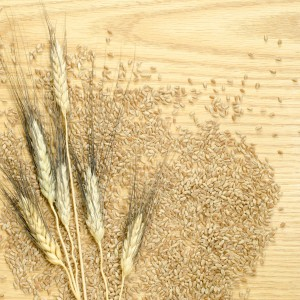 Black bearded wheat heads and kernels