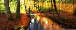 Stichting-gezondheid-natuurbos