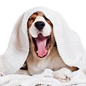 stichting-gezond-hond-vermoeid