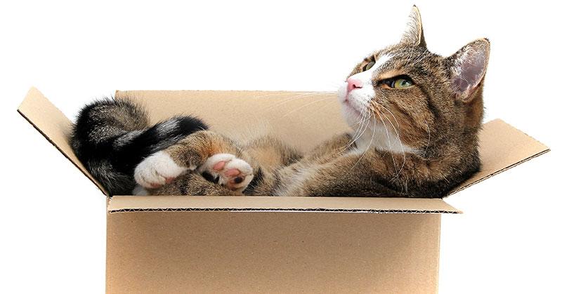 stichting-gezond-kat-in-doos
