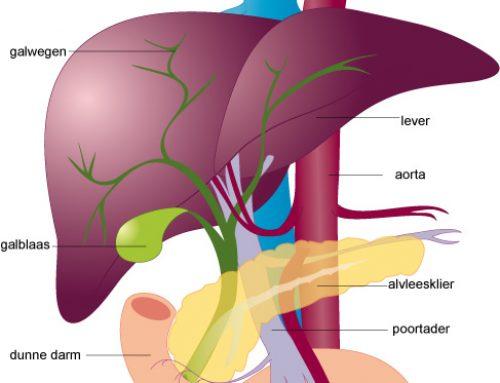 27 tips voor een gezonde lever