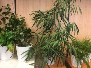Revap Gezonde Planten