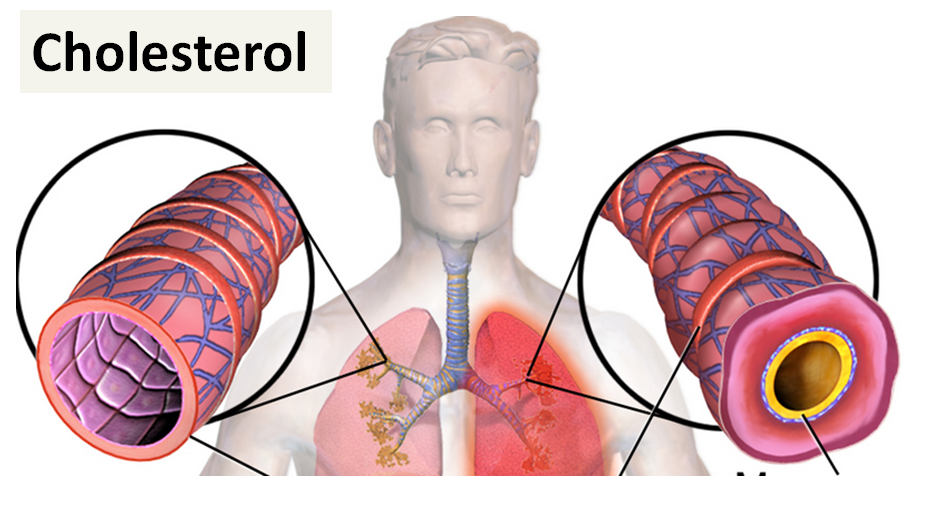 Gezond hart-en bloedvaatstelsel